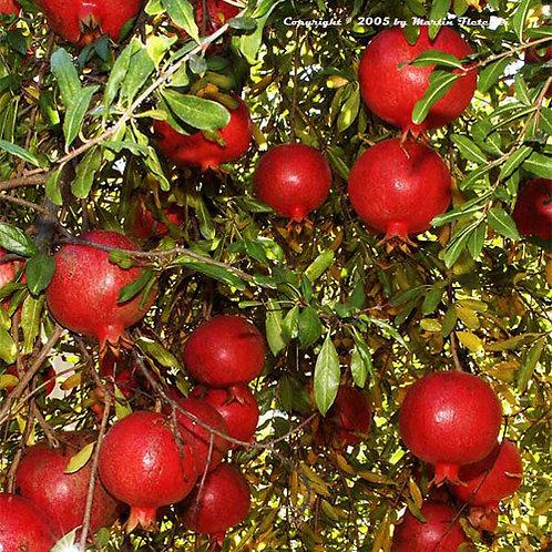 Wonderful Pomegranite