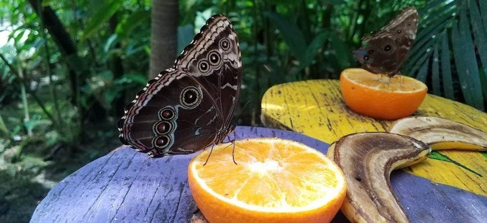 real butterfly (2).jpg