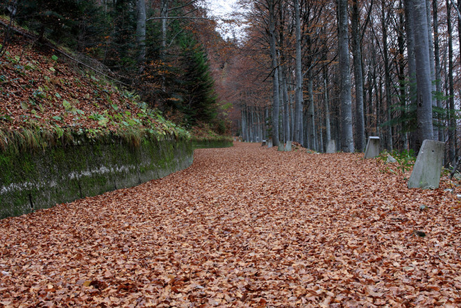Personal Injury Prevention: The Leaves are Falling and So Could You