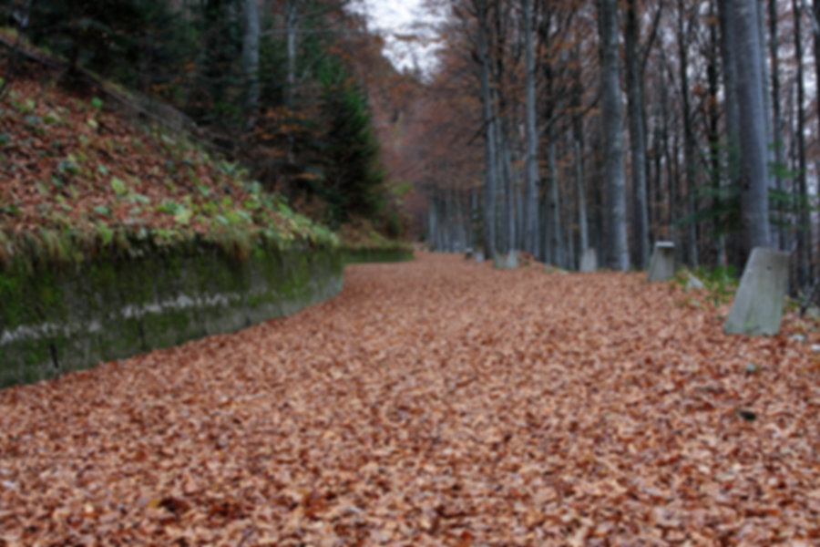 maderas del otoño