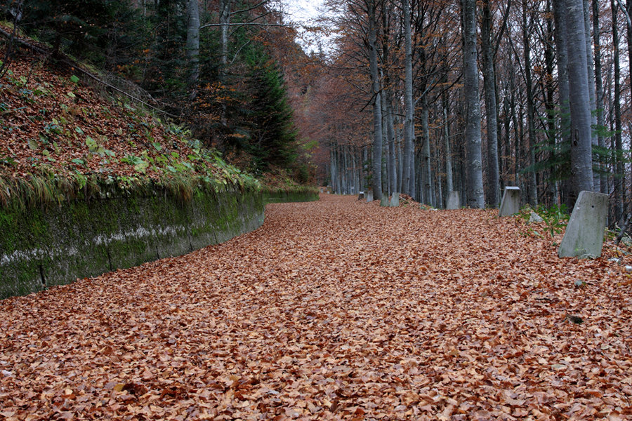 Woods automne