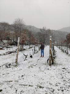 Ukko first walk in the snow