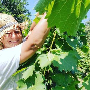 Green pruning at Rvasi Vineyards