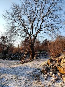 Rvasi Cottage Wisdom Tree