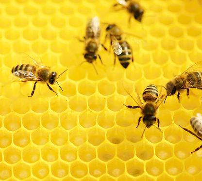 Пчелы на работе