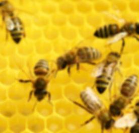 Bee Sting Allergy / Venom Testing