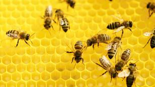 Med je zdravý, ale má i negativa
