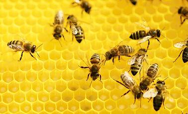 Bees on a honeycomb. Mmmm honey cake...