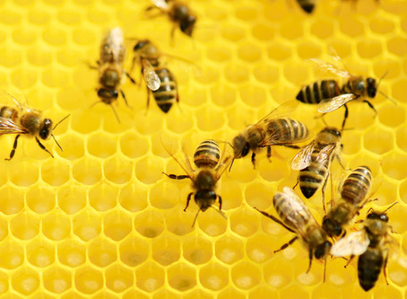 Protecting the Pollinators with Hemp, why Honey Bees Matter!