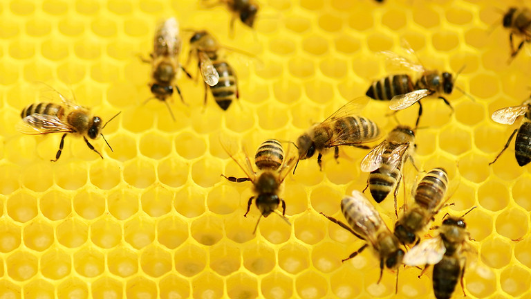Master Gardener July 13th, 2021: What Bees Are These?