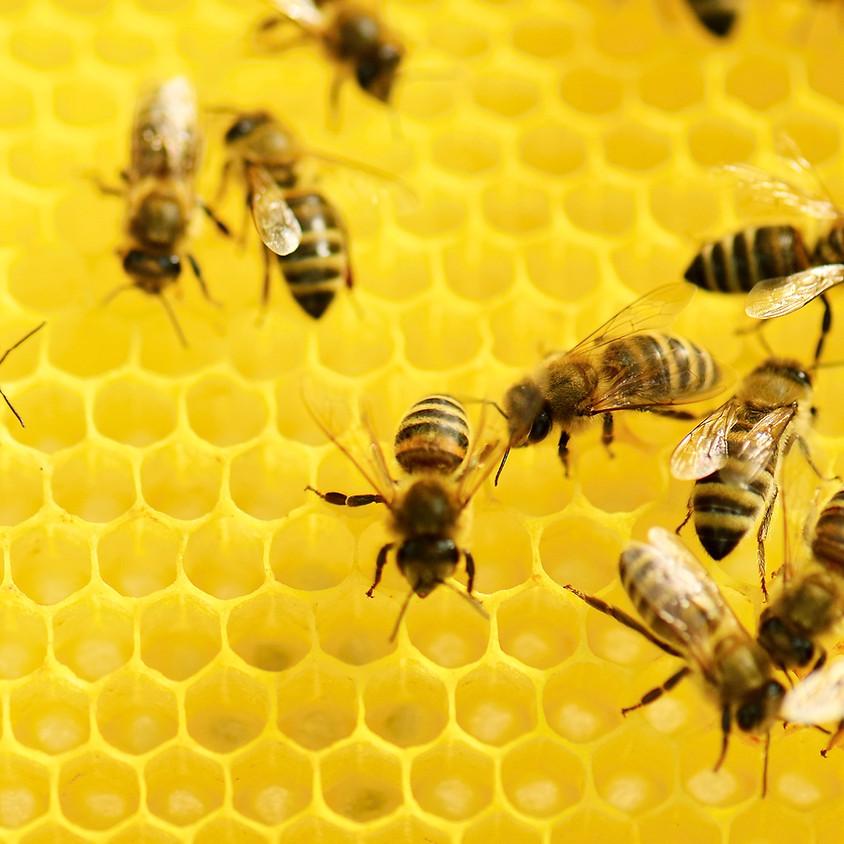 Fabrication d'un bougeoir et sa bougie en cire d'abeille (+2€)