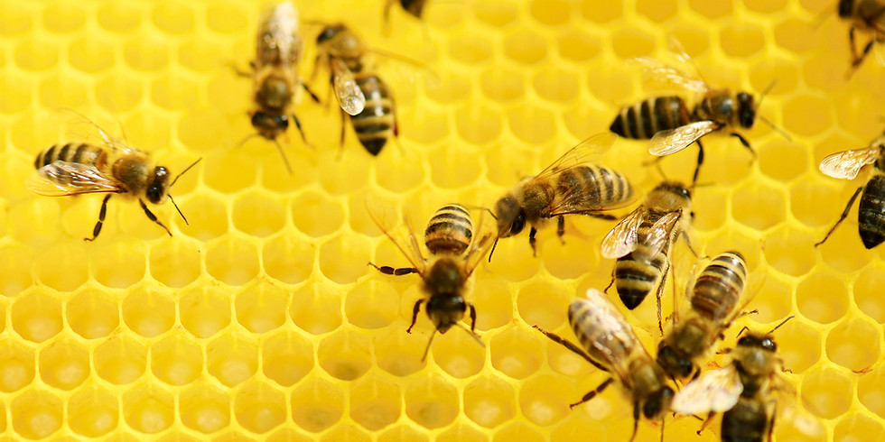 Lunch & Chat: Bees & Honey