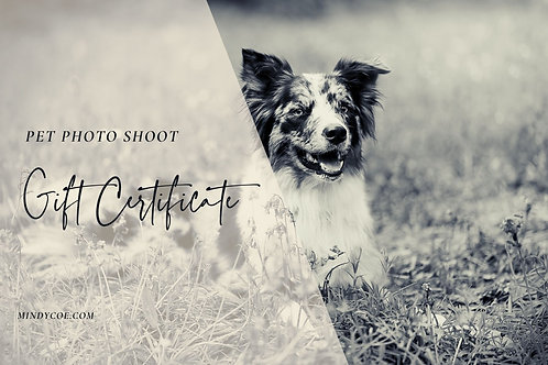 Pet Photography Gift Certificate - FULL SHOOT