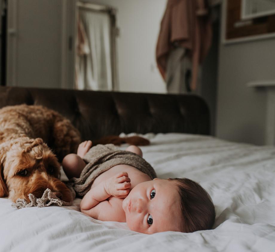 Newborn Baby Home Photoshoot with Dog