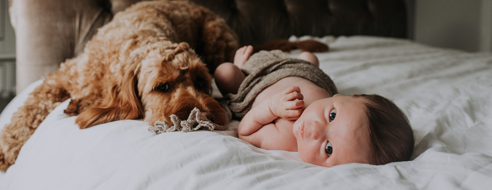 Newborn Baby Home Photoshoot with Dog