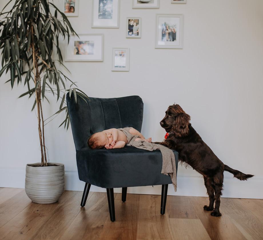 Newborn Baby and Dog