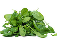 Green spinach on a white background.jpg