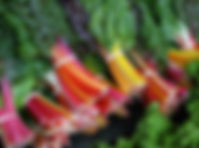 Swiss_Chard_Rainbow.jpg
