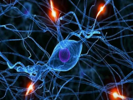 Mindfulness and Neuroplasticity   by Shauna Shapiro, PhD