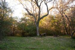 Área camping 2