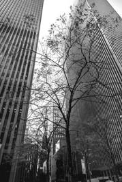 0066_New York_BW_Nov_2018.jpg
