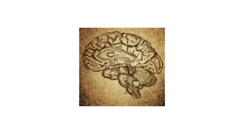 jacob-sock-brain-data-analyst