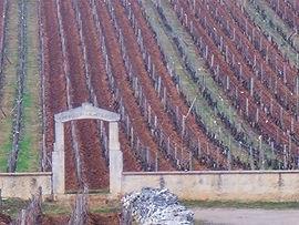 Burgundy 2011 - 1495_edited.jpg