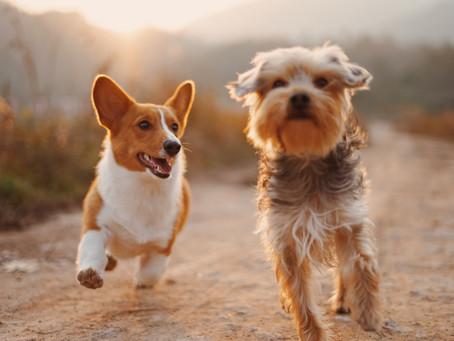 Acariciar um cão pode trazer benefícios para a saúde