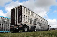 cattle truck loading 3.jpg