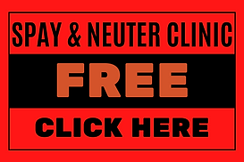 Free Clinic 2.png