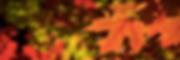 Fall Colors 5k Banner.png