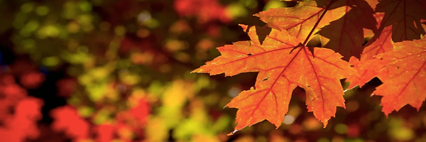 Fall Colors 5k Banner.png