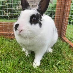 Dotty - Not Available Yet