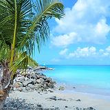 beach-sea-coast-tree-water-sand-625060-p