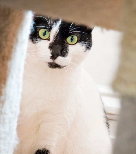 Lima Bean (Tenth Life cat)