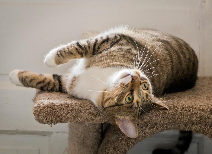 Hootie Hoo (Tenth Life Cat)