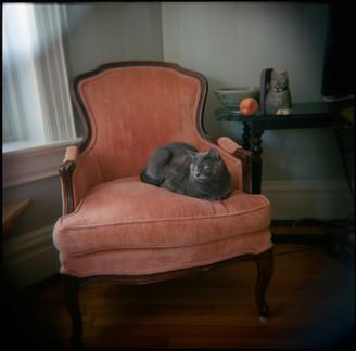 Pet Portraits on film