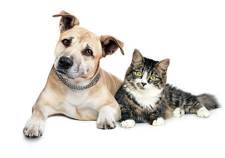 veterinaire la cote nyon 8.jpg