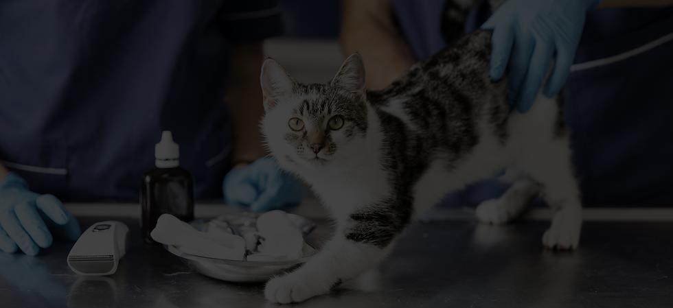 close-up-veterinarians-with-medicine-inj