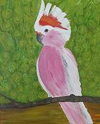 Proud & Pink Cockatoo