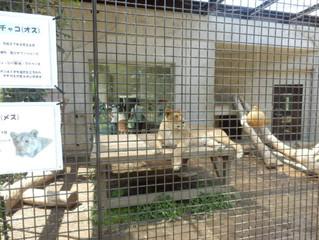 🐵動物園に行こう🐵