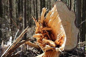 wood-3697793_1920.jpg