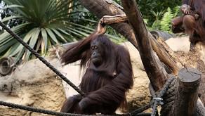 Sommerferienprogramm im Zoo - Erlebnisreiche Ferien vom 07. Juli bis 19. August