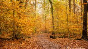 Autumn Season - Nature Photography