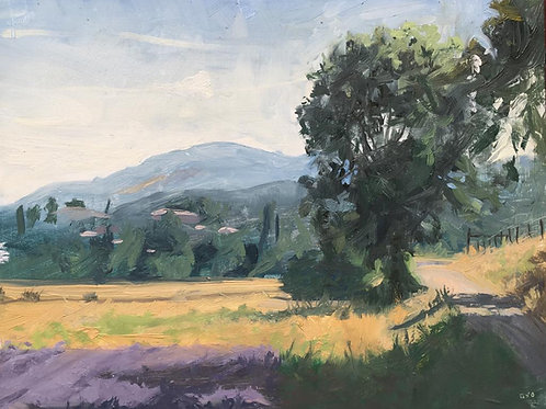 Mountains in the distence and lavender Fields