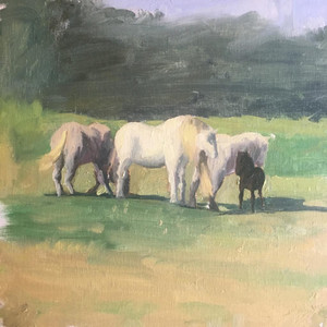 Horses in the south of france