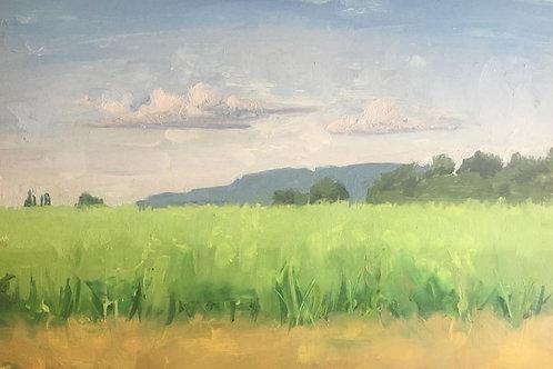 Bourg en bress fields