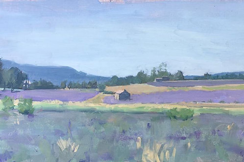 Lavender fields 5