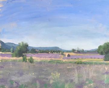 Lavender fields 4