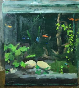 Aquarium and Poissons